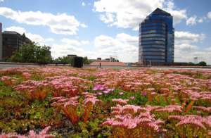 Given its size and the specific Xero Flor system option installed, the green roof atop the building on Rigsbee can prevent more than 50,000 gallons of storm-water runoff annually.