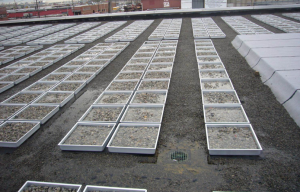Blue-roof trays are held in place with stone ballast and hold up to 2 inches of water. The tray systems resulted in a 45 percent reduction in roof runoff during rainfall events in a New York pilot project.
