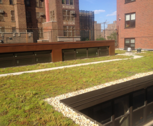Maspeth Roofing & Contracting recommended an extensive green roof assembly featuring lightweight, prevegetated mats, delivered with mature Sedum plants for an instant green roof.