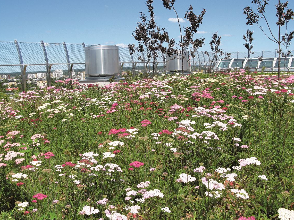 The limits of green-roof feasibility are being redefined by ZinCo's Summer Plains system combined with Aquatec.